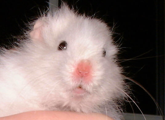 Our lovely hamster died today