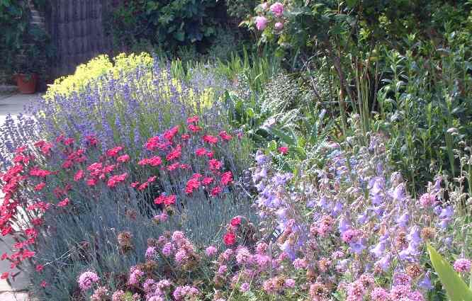 Sissinghurst Castle Gardens - Rose Garden 3