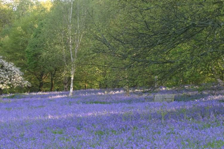 Winkworth Arboretum England UK Page 1